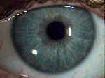 blaugraue Iris